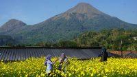Taman Bunga Refugia, Wisata Instagramable di Mojokerto