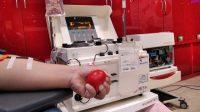Di PMI Surabaya Permintaan Plasma Konvalesen Meningkat