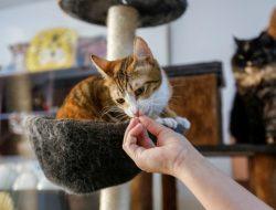 Kafe Kucing di Dubai, Tempat Adopsi Anak Bulu