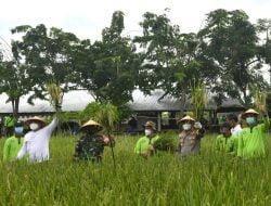 Panen Raya 2 Hektar Padi Digelar di Surabaya