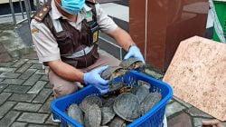 Penyelundupan 633 Satwa Liar Ilegal Gagal di Tanjung Perak Surabaya