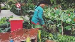 Sejumlah Taman di Surabaya Kembali Dibuka
