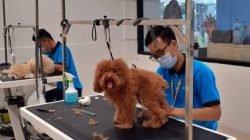 Hadir Pertama di Surabaya, Ini Fasilitas yang Disediakan Pet Kingdom bagi Pet Lover