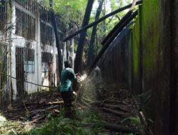 Sudah Menyerupai Hutan, Bekas Penjara Kalisosok Surabaya Mulai Dibersihkan