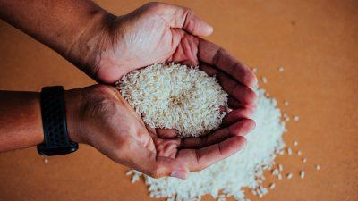 Padi Varietas BK-Situbondo Bisa Menghasilkan 10,56 Ton Per Hektare